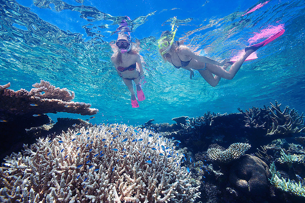 2 day reef daintree rainforest tour billy tea safaris - Best place to dive the great barrier reef ...