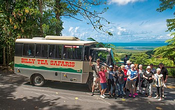 billy tea group daintree rainforest lookout