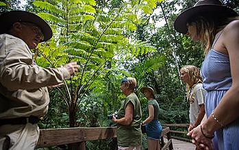 Daintree Rainforest Group